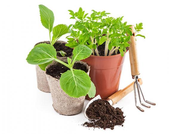 Garden Seeds and Vegetable Plants for Families: Give Now (The Giving Spirit)